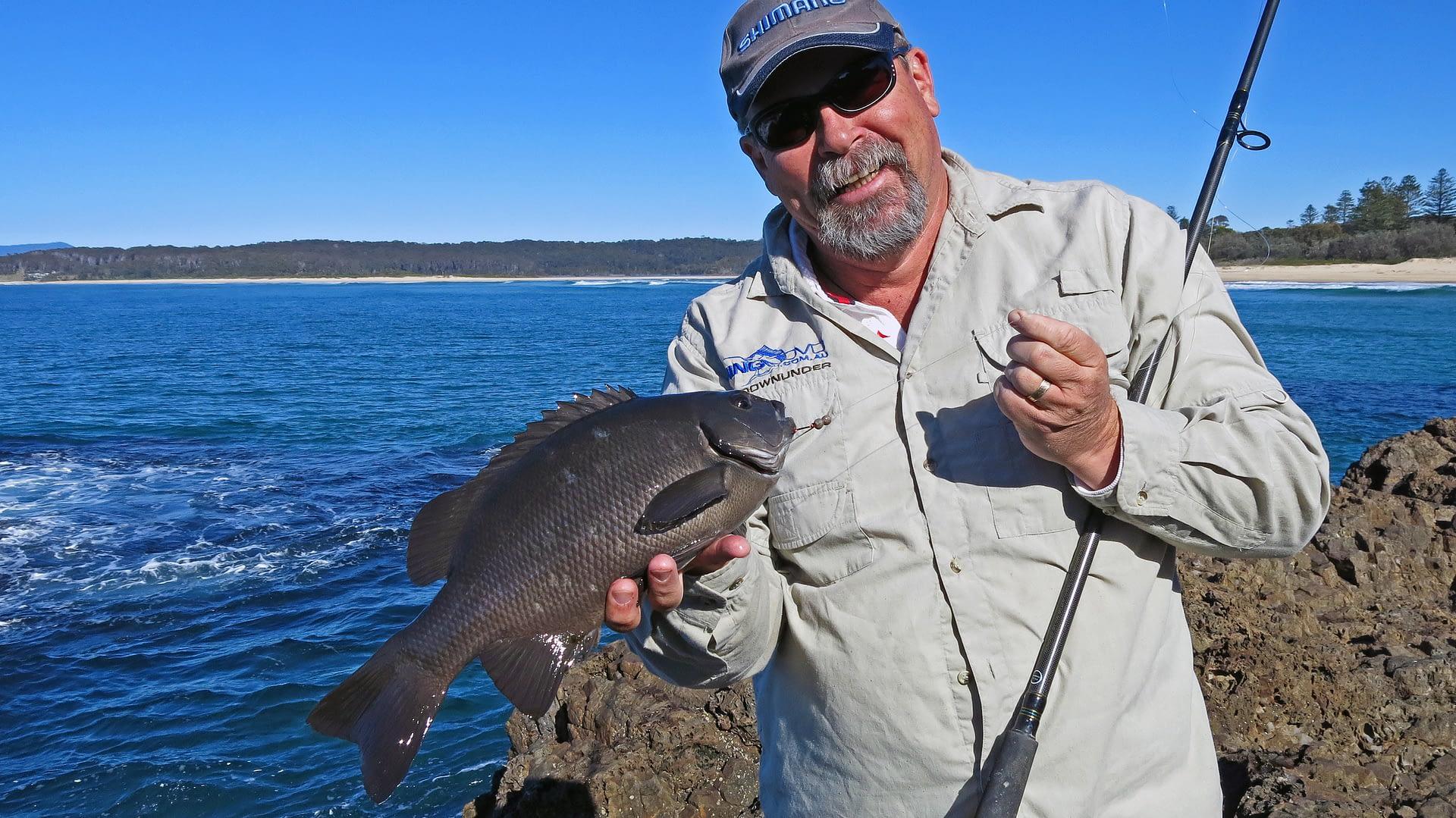 Black drummer or rock blackfish are a popular rock fishing target around Tuross Head, NSW.