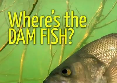 Where's The Dam Fish?!