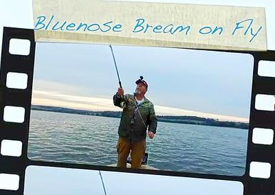 Bluenose Bream On Fly