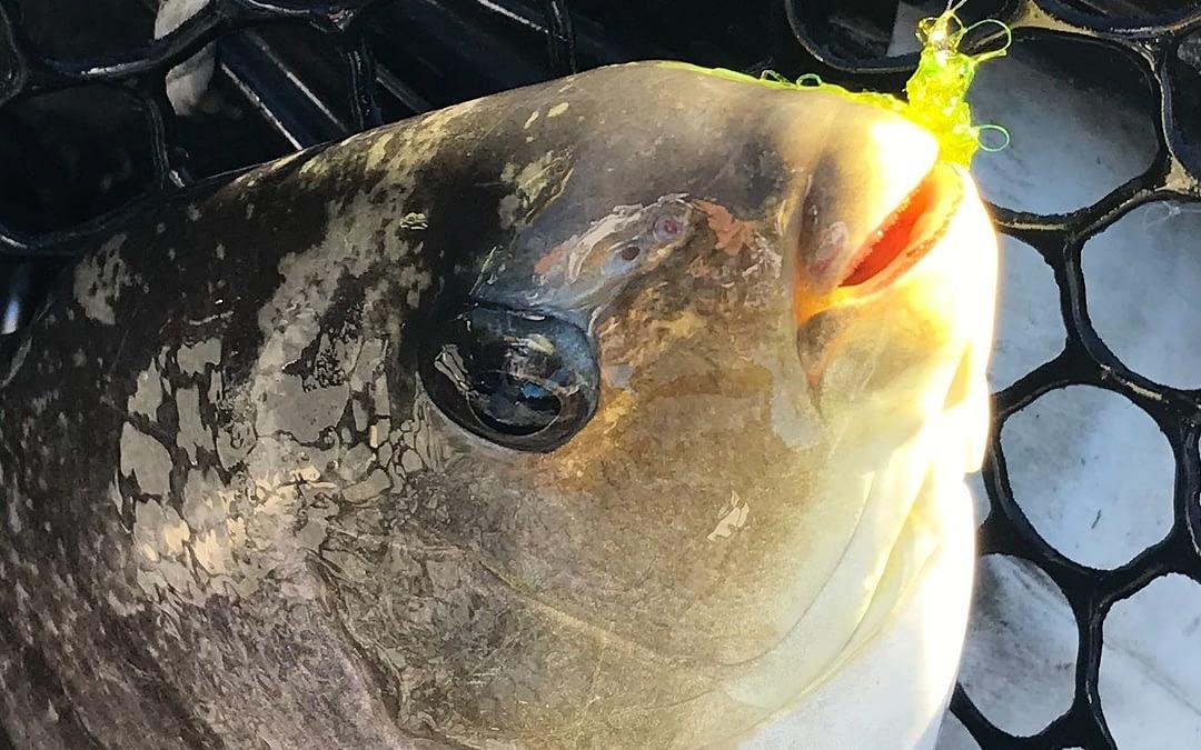 Blackfish Fly & Bait Combo Rig