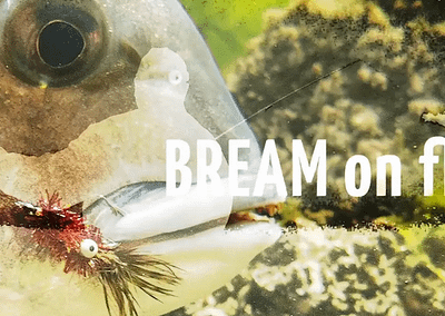 Bream On Fly