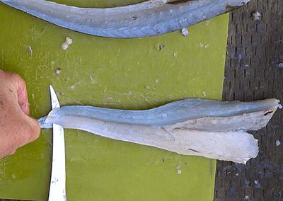 QUICK TIP: Skinning Fish Fillets