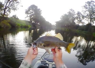 Aussie Bass On Fly