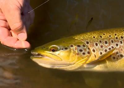 Trout — 28 Gates, Tasmania : A Fisherman's Life