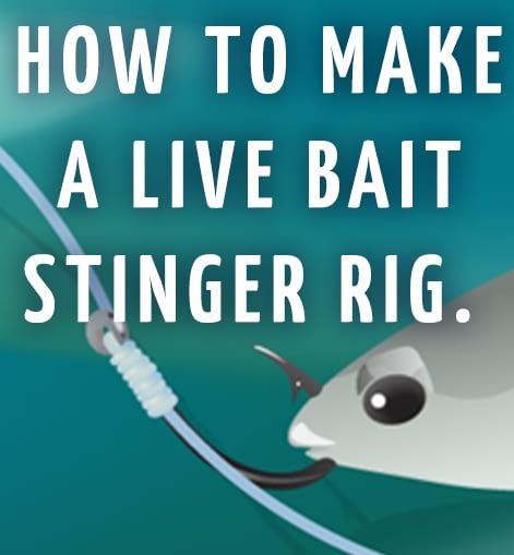 TACKLE TWEAK — Live Bait Stinger Rig