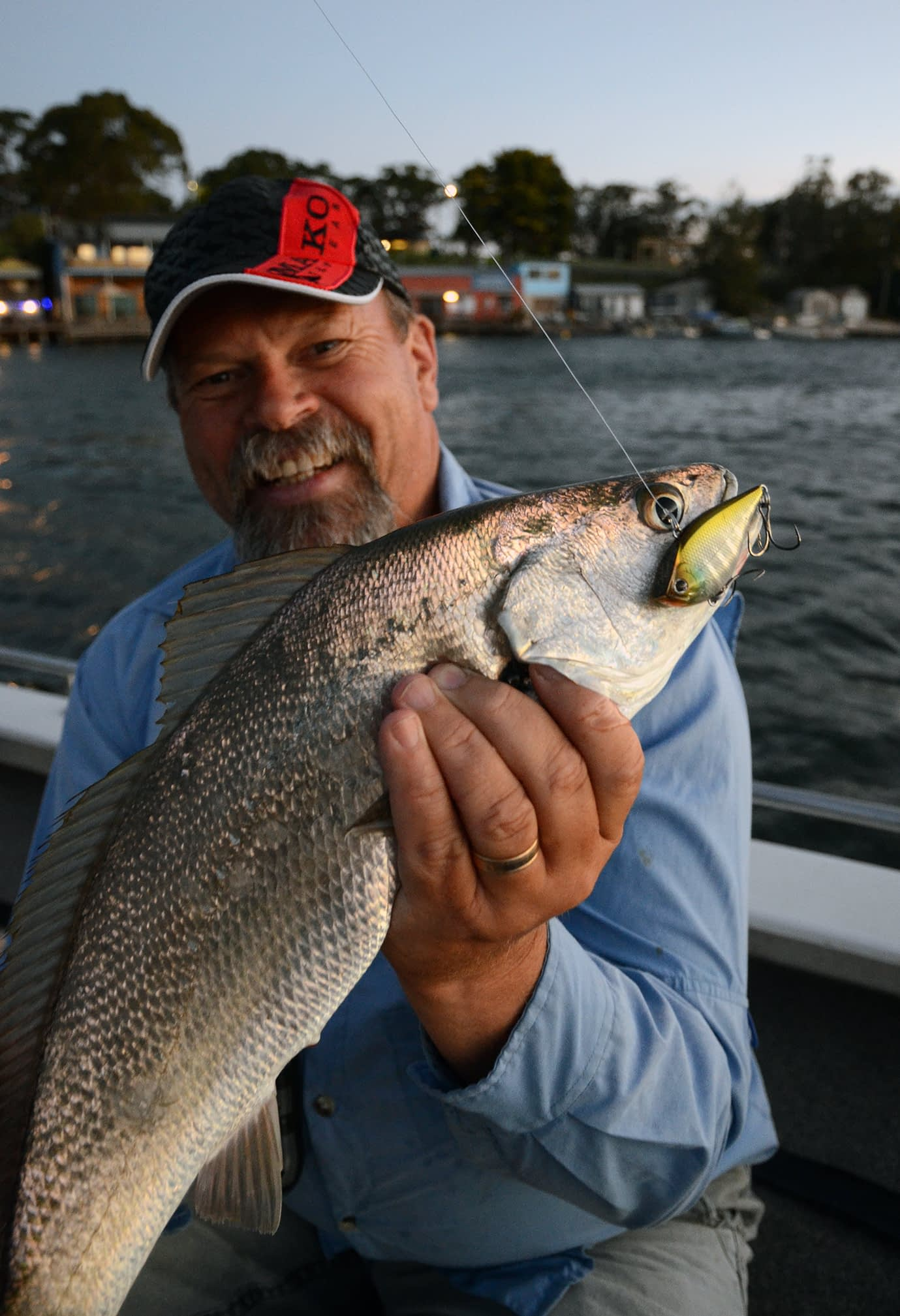 """A small """"soapie"""" mulloway or jewfish taken right in front of The Botshed at Tuross Head, NSW."""