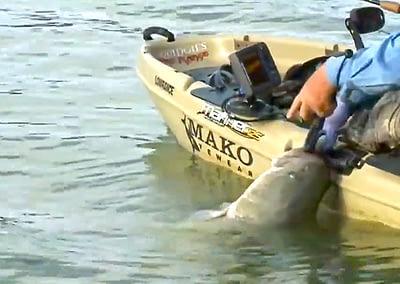Kayak Cod!